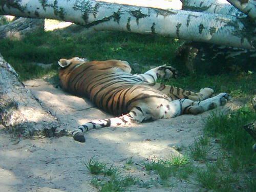 Zoologická záhrada liberec - česká republika
